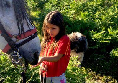 caballo-6