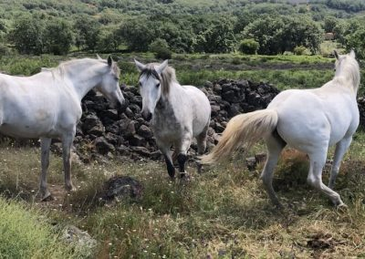 caballos jarandilla